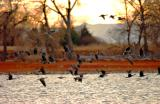 Barr Lake and Geese