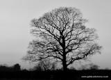 - 28th january 2011 - tree