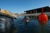 10th October 2012 - dive!