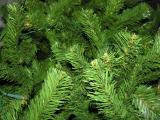 - 11th December 2005 - tree