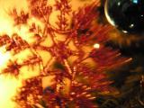 - 19th December 2005 - Spinning