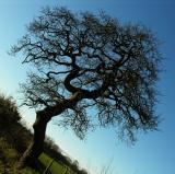 - 1st January 2006 - New Year Tree