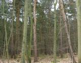 - 26th March 2006 - forest