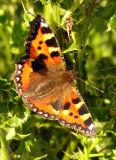 - 14th July 2006 - flutterby