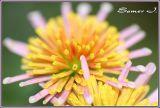 Flower-DOF.jpg