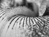 Iris Up Close