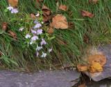 Flowers along the walk