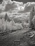Middle Fork Nooksack River II