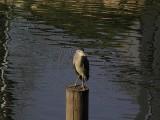 river bird2.JPG