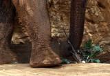 elephant foot.JPG