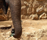 elephant trunk green1.JPG