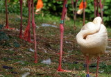 flamingo legs.JPG