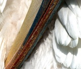 pelican beak1.JPG