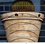 cactus planter.jpg