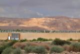 P6251310_farm near dead sea.jpg