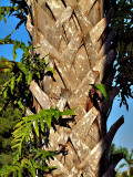 P8211728_tree bark braid.jpg