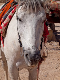 PB230007_white horse face.jpg