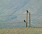 PB212441_qumran birds_800.jpg
