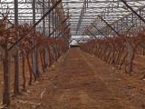 PB222520_grapes_800.jpg
