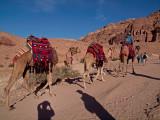 PB230100_camels uphill800.jpg