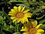 PC250009_flower.jpg