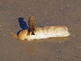 P1020449_sparrow bread.jpg