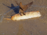P1020451_sparrow wings bread.jpg