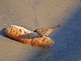 P1020453_sparrow bread.jpg