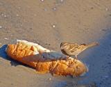 P1020454_sparrow bread.jpg