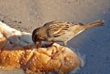 P1020455_sparrow tongue bread.jpg