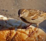 P1020456_sparrow bread close.jpg