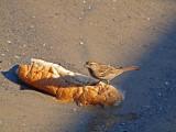 P1020458_sparrow bread.jpg