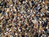 P1020522_seashells.JPG