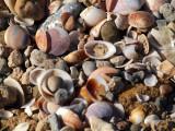 P1020523_seashells.JPG