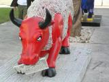 Bulls in Tel Aviv