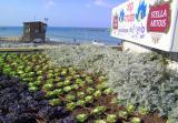 New plantings.JPG