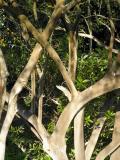 gan3 tree1 1-30-2006 4-29-35 PM 1712x2288.JPG