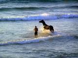 horses_sea7.JPG