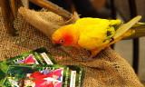 birdie travel.JPG