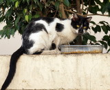 cat on mazeh st.JPG