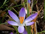 spring_2006