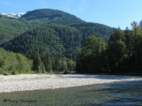 Orford River - Grizzly Bear habitat 1.jpg