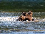 Grizzly Bear cubs 1a.jpg