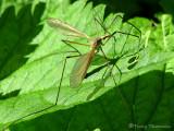 Flies of B.C.