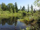 Little River pond 1.JPG