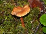 Fungus A1.jpg