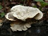 Fungus E2.jpg
