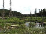 Boreal lake north of Kakwa Wildland Area copy.jpg