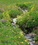 Stream above Lemming Lake 2.jpg