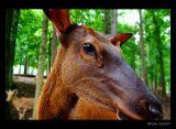 Lazy 5 Ranch - Elk
